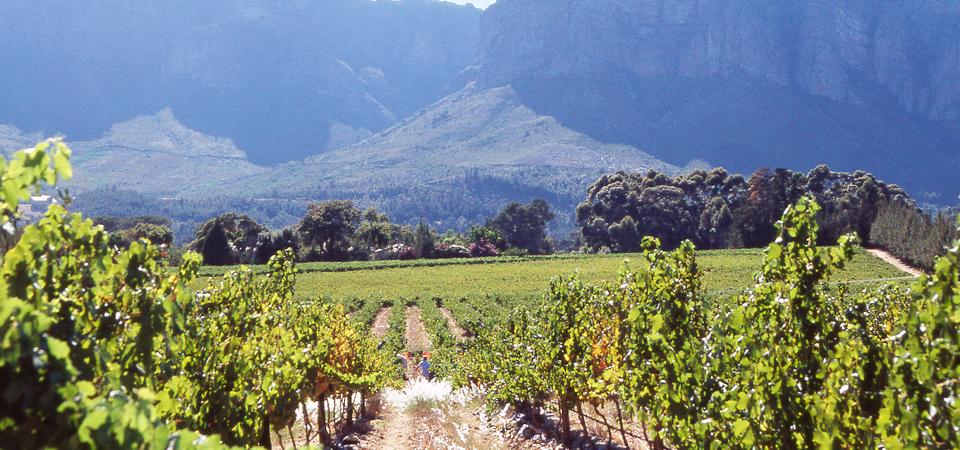 Espectacular viaje a Sudáfrica: el encanto salvaje de uno de los países más hermosos del mundo