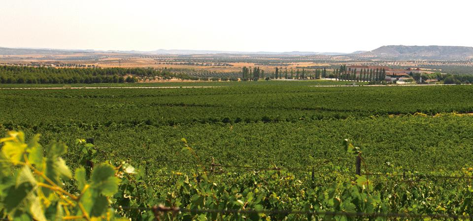 Descubre las etapas del vino en una visita con cata a Casa del Valle
